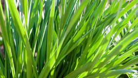 Green leaves Royalty Free Stock Photography