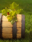 Green leaves of the grape on the wine barrel Stock Photos