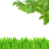 Green leaves and grass Royalty Free Stock Images