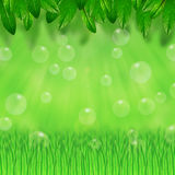 Green leaves, grass and bubbles Royalty Free Stock Photography