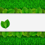 Green leaves on grass card Stock Image