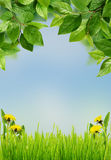 Green leaves with grass and dandelion flowers Royalty Free Stock Photo