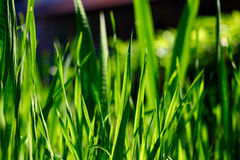 Green leaves and grass Stock Photos