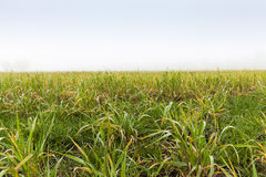 Green leaves of grass Stock Photo