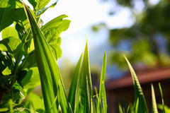 Green leaves and grass Stock Photography
