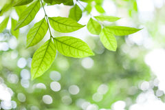 Green leaves on green bokeh sunshine background Stock Images