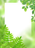 Green Leaves Greeting Card Royalty Free Stock Photo