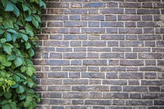 Green leaves with grey brick wall Stock Photo