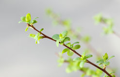 Green leaves on grey sky Royalty Free Stock Photography