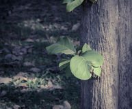 Green leaves growing in tree trunk Royalty Free Stock Photo