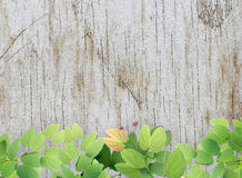 Green leaves on grunge white wood. Royalty Free Stock Photography
