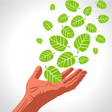 Green leaves hand . Eco Friendly Vector illustration. Stock Photography