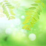 Green leaves and harmony background Stock Photography