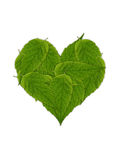 Green leaves heart Stock Image