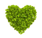 Green leaves heart. Shape isolated on white - ecology concept image royalty free illustration