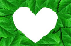 Green leaves heart isolated on white background Royalty Free Stock Photography