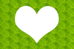Green leaves in heart shape Stock Photos