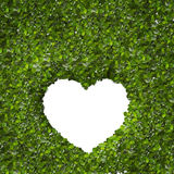 Green Leaves in heart shape on white background Stock Image