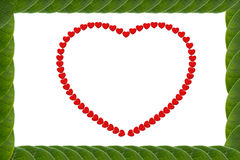 Green leaves heart-shaped frame Royalty Free Stock Photo