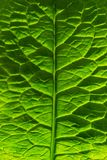 Green leaves highlighted by the sun. The plant has a beautiful structure. royalty free stock photos