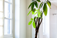 Houseplant in white flat Royalty Free Stock Images