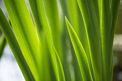 Green leaves illuminated by the sun Stock Photography