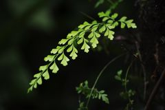 Green leaf. Green leaves illuminated by sunlight in forest shadow Royalty Free Stock Images