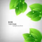 Green leaves illustration Royalty Free Stock Photos