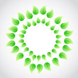 Green leaves illustration design Royalty Free Stock Image