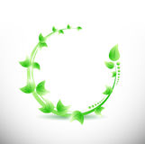 Green leaves illustration design Royalty Free Stock Images