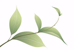 Green leaves illustration Stock Photo