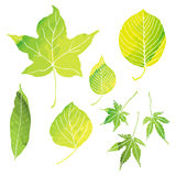 Green leaves illustrations by watercolor paint. Green leaves illustrations with data royalty free illustration