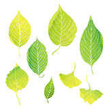 Green leaves illustrations by watercolor paint. Green leaves illustrations with vector data royalty free illustration