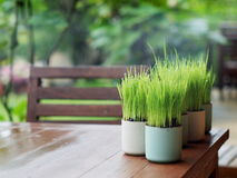Free Green Leaves In A Cup Stock Photo - 46452100