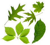 Green leaves isolated stock photos