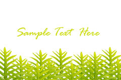 Green leaves isolated for text and background Stock Photo