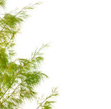 Green leaves isolated on white background Royalty Free Stock Photo