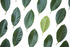 Green leaves of jackfruit tree texture background and banner, creative layout made of green leaves stock image