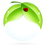 Green Leaves with Ladybird Royalty Free Stock Photos