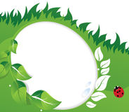 Green leaves and ladybug. Royalty Free Stock Images