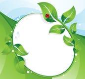 Green leaves and ladybug Stock Photography