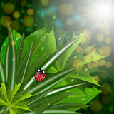 Green leaves with ladybug Stock Images