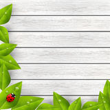 Green leaves with ladybug on wood Stock Photos