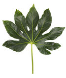 Green leaves on a large decorative flower Royalty Free Stock Photos