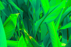 Green leaves Leaf background Stock Images