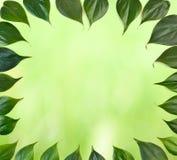 Green leaves leaf border Stock Images
