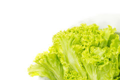 Green leaves lettuce. On dish Stock Image