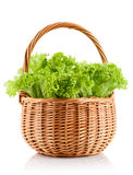 Green leaves lettuce in the basket Royalty Free Stock Images