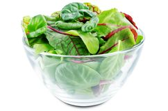 Green leaves for lettuce, spinach, chard, arugula, beet greens on a white isolated background. Toning. selective focus royalty free stock image