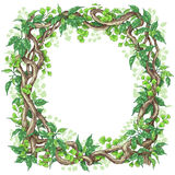 Green Leaves  and Liana Branches Frame. Hand drawn branches and leaves of tropical plants. Square frame made with green fern, ficus   and liana trunks.  Space Royalty Free Stock Image
